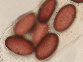 Sporen in Wasser, ca. x900