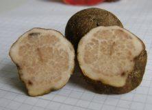 Fruchtkörper, (c) P. Schäfer