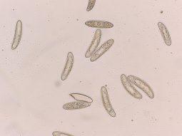 Sporen in Wasser, x200