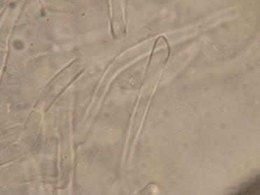 Haare der Außenseite in Wasser, x1250