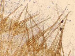 Randhaare in Wasser, ca. x200