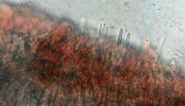 Haare der Außenseite in Wasser, x500